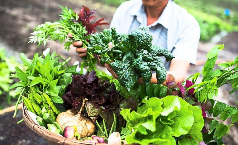 Новият сезон за земеделските производители